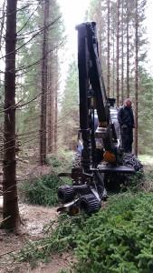 skog-02